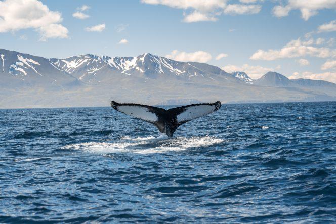 Husavik islandia experiencias destinos